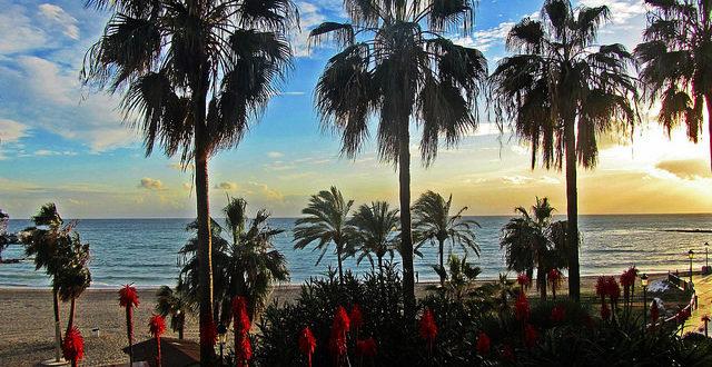 Марбелья - Пальмы