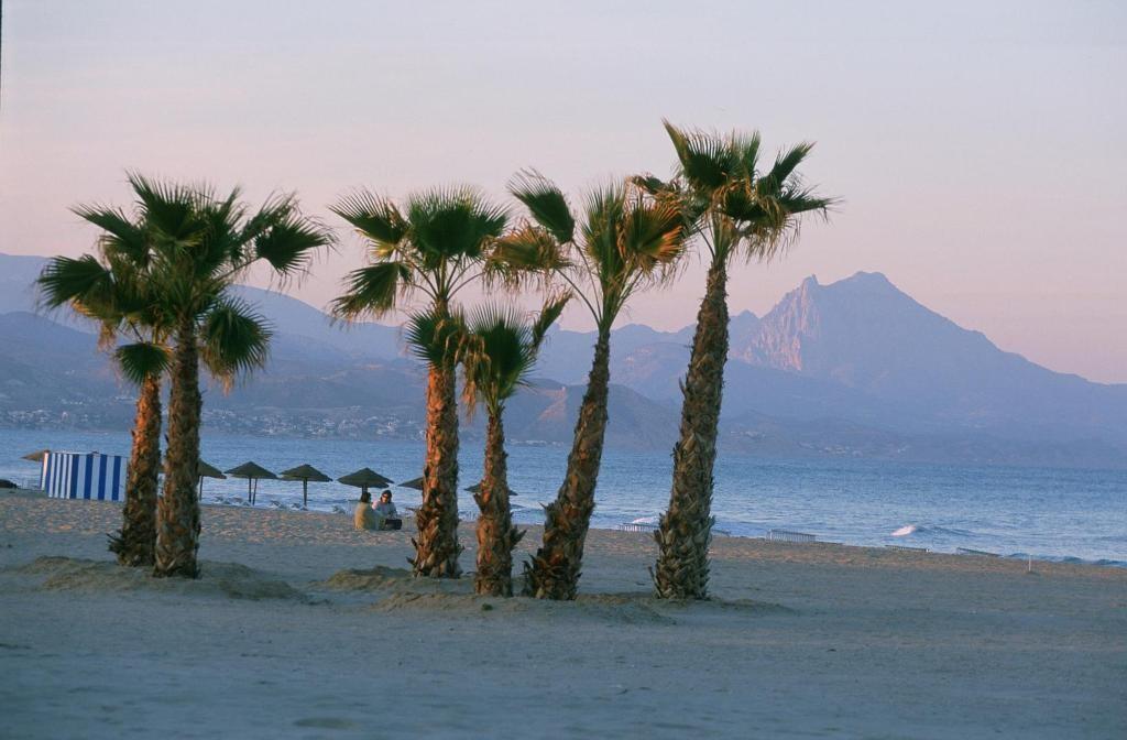 Пальмы на пляже San Juan в Аликанте