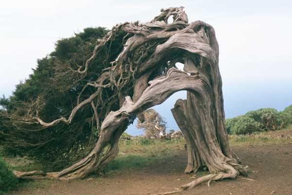 Святое Дерево