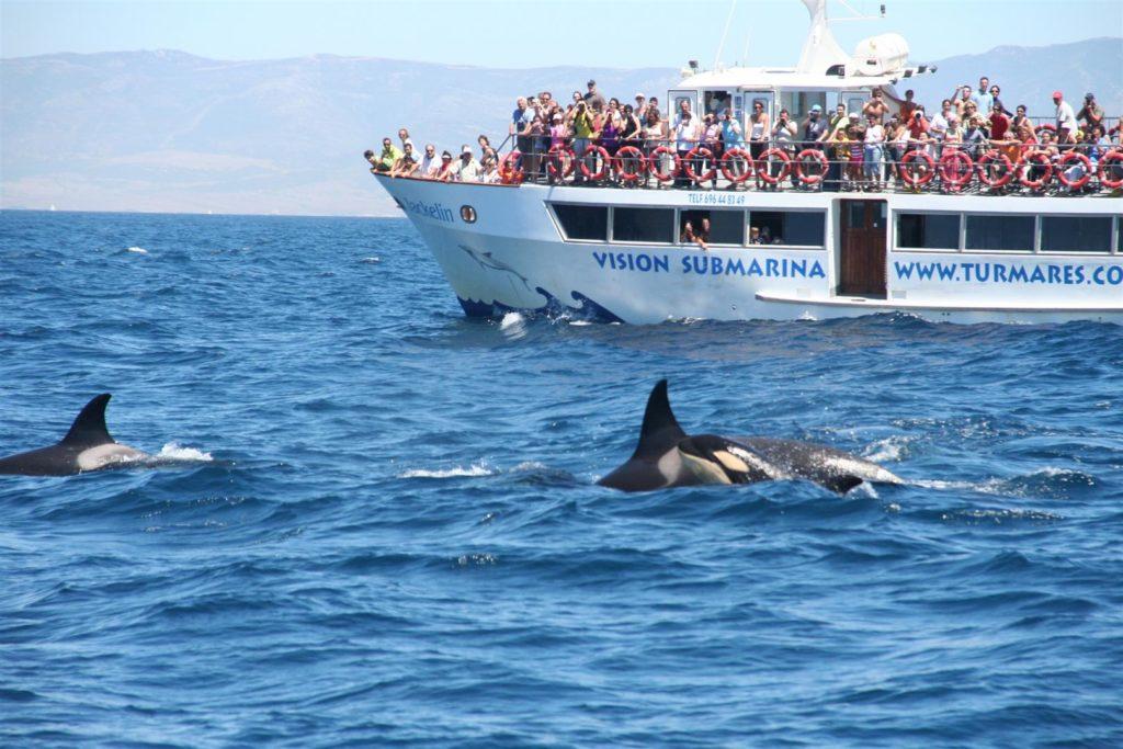 Наблюдение за дельфинами