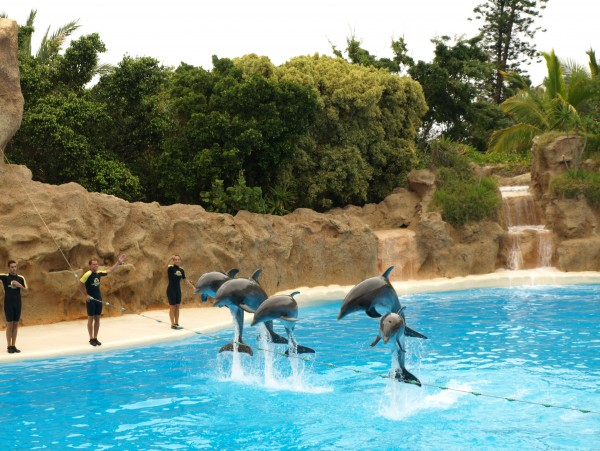 Шоу дельфинов