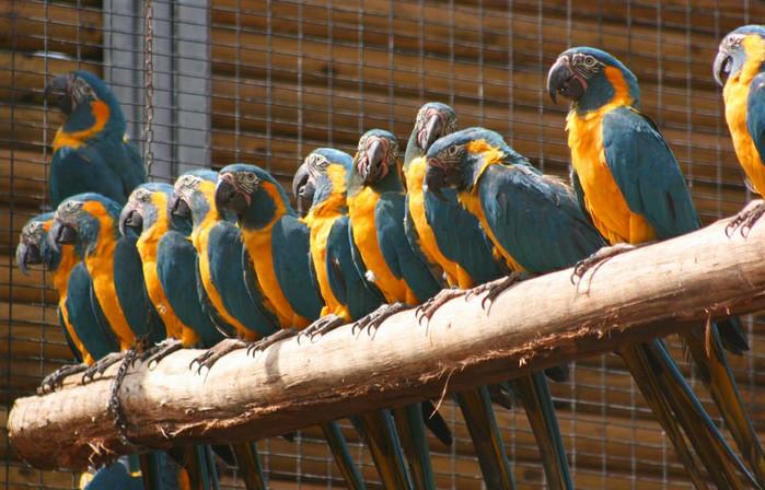 Лоро-парк - парк попугаев