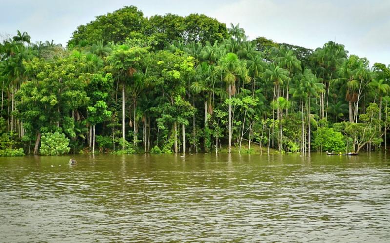 Река Амазонка, Южная Америка