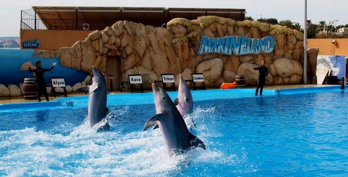 """Дельфины в парке """"Маринеленд"""""""
