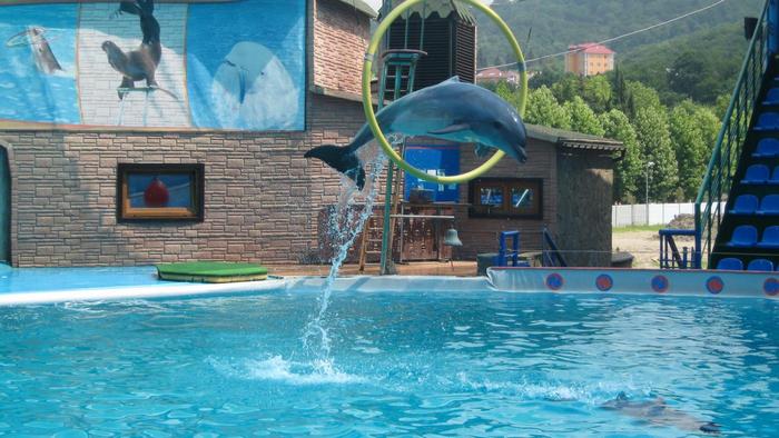 """Дельфинарий """"Акватория"""""""