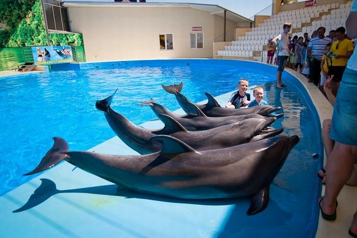 "Дельфинарий ""Немо"""