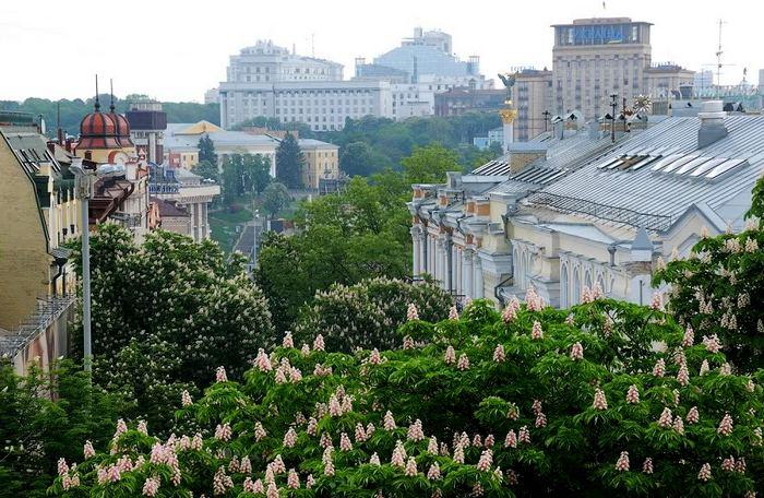 Цветущие каштаны на улицах Киева