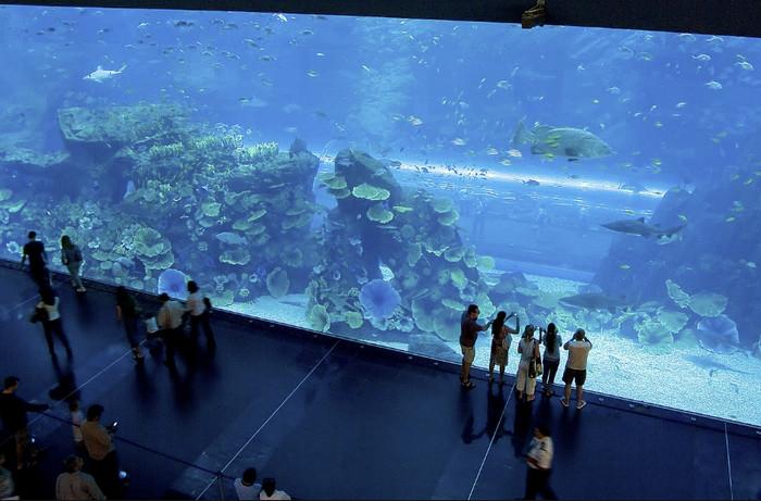 Гигантский аквариум в Дубае