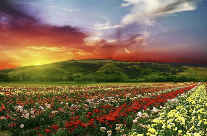 Долина роз, Болгария