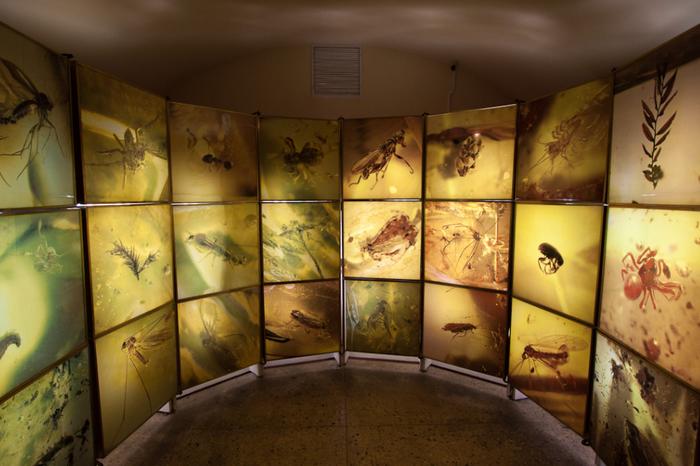 Музей янтаря внутри