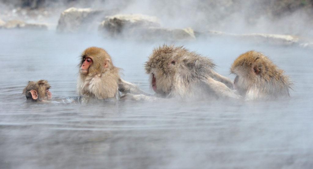 Парк снежных обезьян Джигокудани