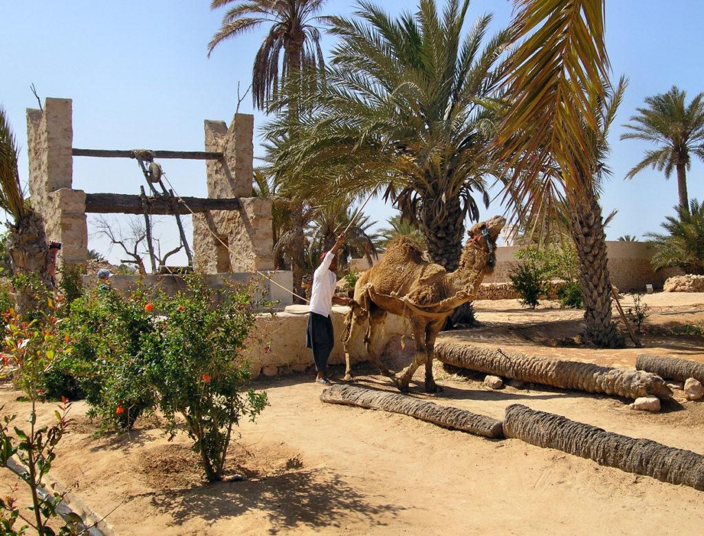 Парк «Djerba Explore»