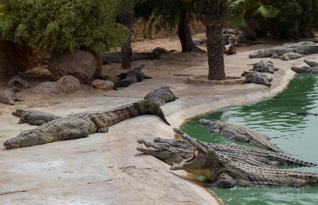 Ферма с крокодилами.