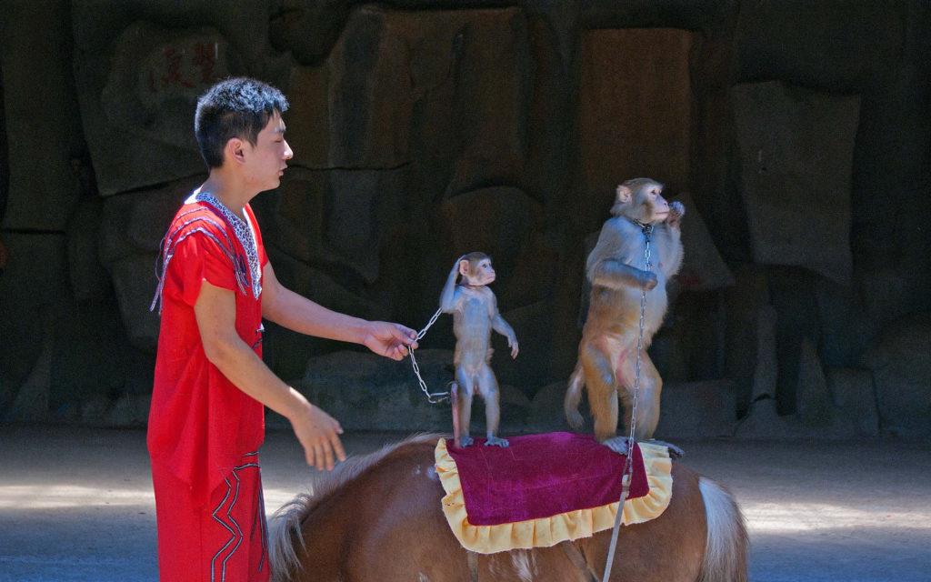 Шоу на обезьяньем острове