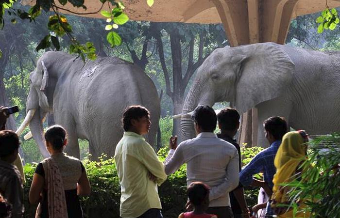 Зоопарк в Дели
