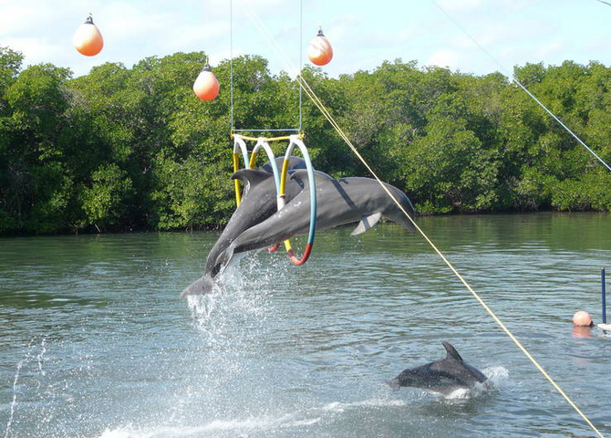 Дельфинарий Варадеро