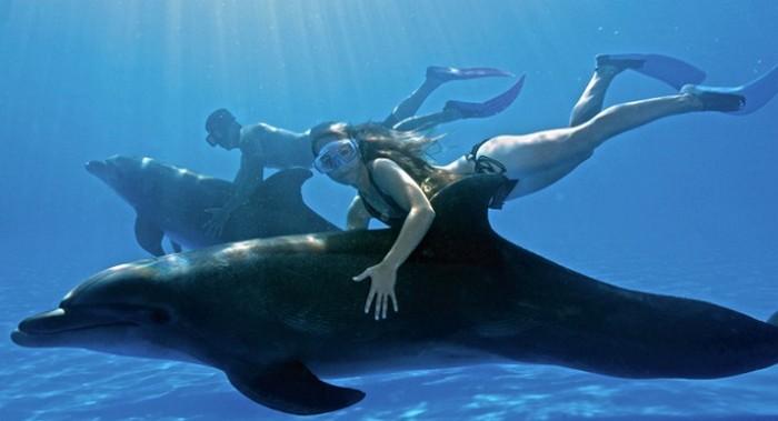Отдых с дельфинами