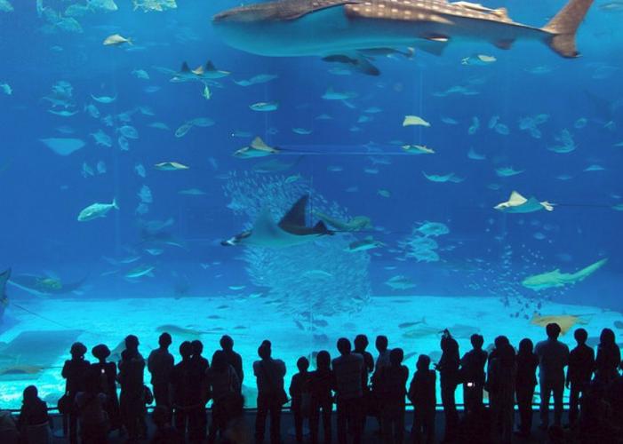 Океанариум «Водный мир»