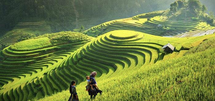 Террасные рисовые поля в Сапе