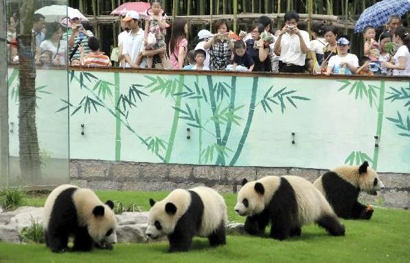 Парк диких животных